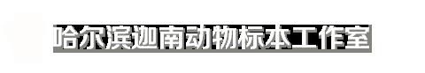 哈尔滨亚博官网app|哈尔滨动物亚博官网app|哈尔滨宠物亚博官网app|哈尔滨亚博官网app制作|哈尔滨亚博官网app公司|黑龙江亚博官网app|哈尔滨迦南动物亚博官网app工作室